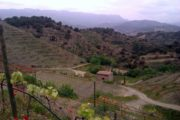 Poboleda / region Priorat.